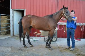This nameless standardbred gelding was saved in part by VAULT donations. He is going to be retired by a loving teenage boy and his family.