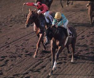 This SI shot of Northern Dancer winning the Florida Derby has come down through the decades with me. Once the prized possession of a 14 year-old girl, it now sits in a frame above my computer.