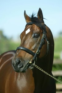 DANEHILL'S son, DANEHILL DANCER, a sire of sires.