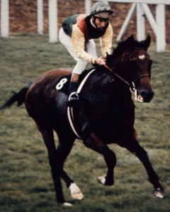 Lester Piggott and NIJINSKY, the last British Triple Crown winner.