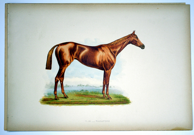 A late nineteenth century print of PLAISANTERIE, born in 1882, by WELLINGTONIA out of