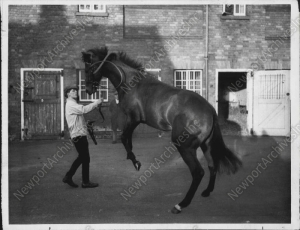 VAGUELY NOBLE, shown here before his sale to , was the sire of champions