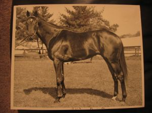 BOLD RULER, the sire of the incomparable SECRETARIAT, was the son of NASRULLAH. BOLD RULER is represented in A.P. INDY'S pedigree on both the top and the bottom.