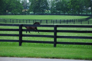 Turned loose in his paddock, A.P. was gone in a flash. Copyright protected. Used by permission of Liz Read.