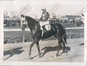 DISCOVERY was named Horse of the Year for 1935. Photo and copyright, The Chicago Tribune.