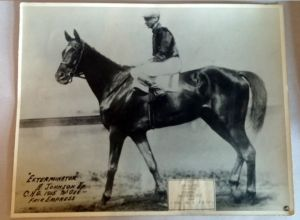 "C.C. Cook's great shot of EXTERMINATOR, whom he once described as ""the beautiful and the glorious."" Copyright KEENELAND-COOK."