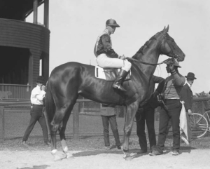 BELDAME was one of Sunny Jim's Handicap Fillies.