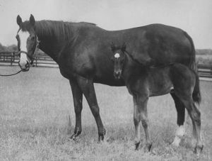 TOP FLIGHT, shown here with her Man O' War foal, joins