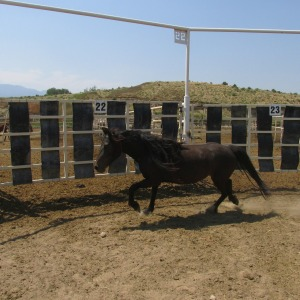 #9579 running in her paddock.