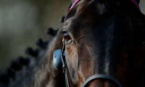 The eye of a champion. Photo and copyright, THE GUARDIAN. Photographer:Tom Jenkins.