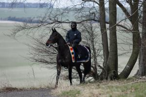 On the gallops. Nico and SPRINTER SACRE. Photo and copyright, Toby Connors.