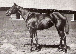 ANITA PEABODY, a gift to Mrs. Hertz from her husband, was a spectacular filly in her own right.