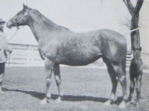 The grey VALKYR as a broodmare was still another impressive daughter of MAN O' WAR.