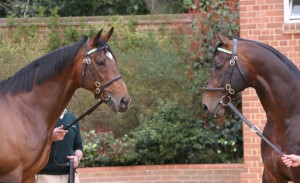 FRANKEL and OASIS DREAM at Banstead Manor.