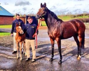 DANEDREAM and her 2014 FRANKEL filly. She also has a 2015 FRANKEL colt.