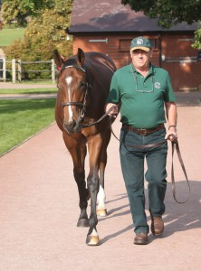 DAR RE MI'S colt by FRANKEL looks a good deal like his sire.