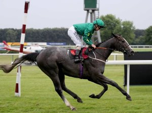 The grey FRANKUUS shown winning on debut.