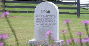 NOOR'S GRAVE_a27821b25dc6e687af31113b8eb00abf