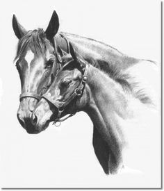 ...whereas SHUVEE with her first foal bespeaks a more experienced representational hand.