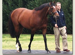 Should IDAHO, HOUSESOFPARLIAMENT or SWORD FIGHTER bring home the St. Leger, it will be a first for mega-sire GALILEO