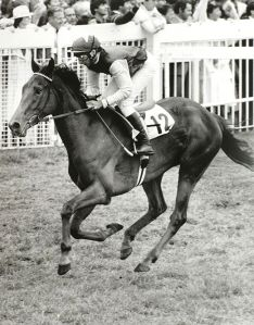 The mighty OH SO SHARP was a daughter of KRIS. As Steve Cauthen would say on retirement, she was the best filly he ever rode.