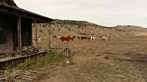 Black Hills Wild Horse Sanctuary: abandoned movie set. Photo and copyright, THE VAULT.