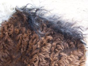 Curly mustang winter coat.
