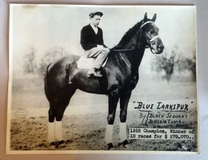 BLUE LARKSPUR, a superb thoroughbred from track to breeding shed, captured in the lens of W.J. Gray. Photo and copyright, the estate of W.J. Gray.
