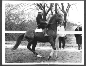 THE COUNT was a handful, but according to Longden, he was not a mean horse at all. Photographer and source unknown.
