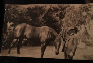 W.J. GRAY with an unidentified horse. Used with the permission of his granddaughter.