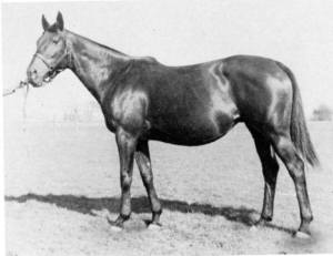 QUICKLY, the dam of COUNT FLEET. Photographer unknown.