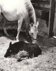 GLACIAL PRINCESS with her dam, GAY NORTH, a daughter of the mighty NEARCTIC, who sired NORTHERN DANCER.