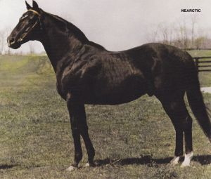 NEARCTIC, who famously sired Canada's NORTHERN DANCER, was the BM sire of GLACIAL PRINCESS.