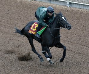 SOUL STIRRING works prior to the G1 Hanshin Juvenile Fillies.