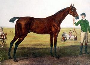 Herod_(horse)