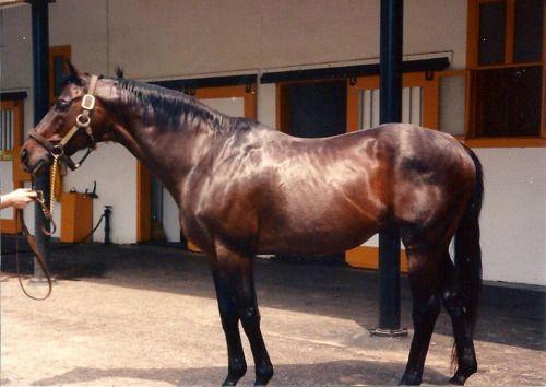 MR PROSPECTOR_5d7d941eb6f38414c07e5e4c9518c7cb--race-horses-horse-racing